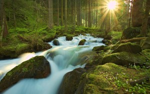 nature_forest_and_sunlight_by_stardeht-d4coduy